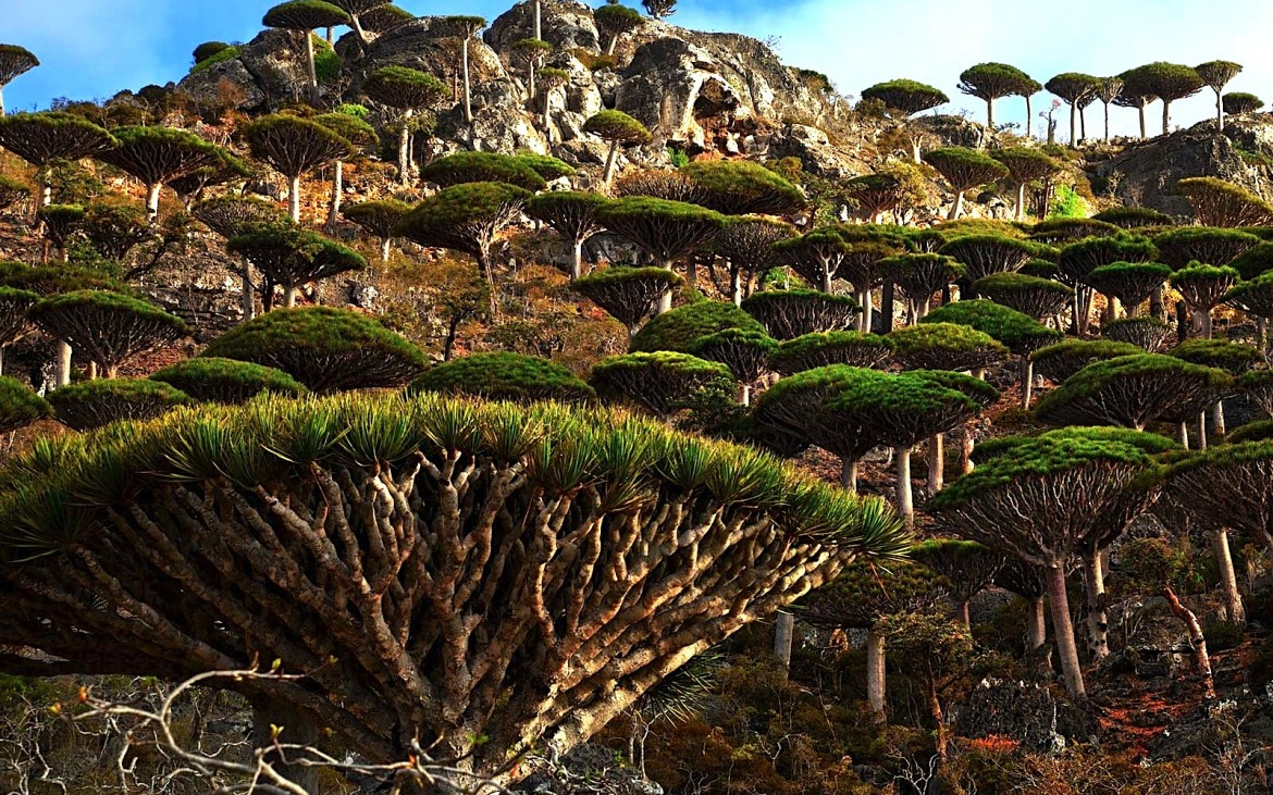 Socotra in the Indian Ocean